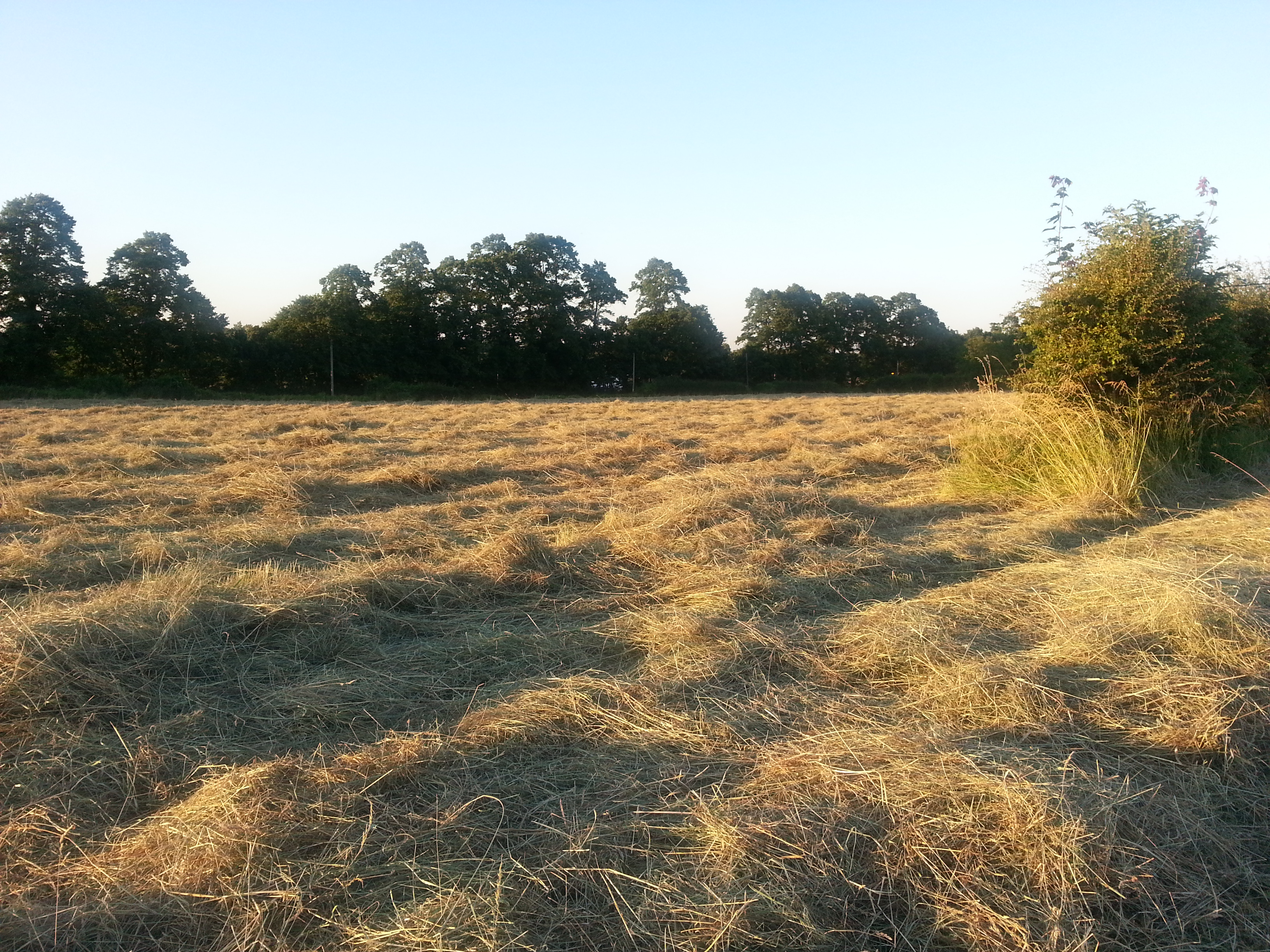 haymaking in Kent
