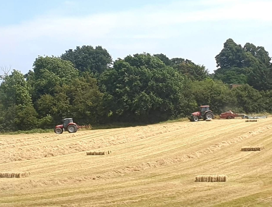 haymaking in Kent